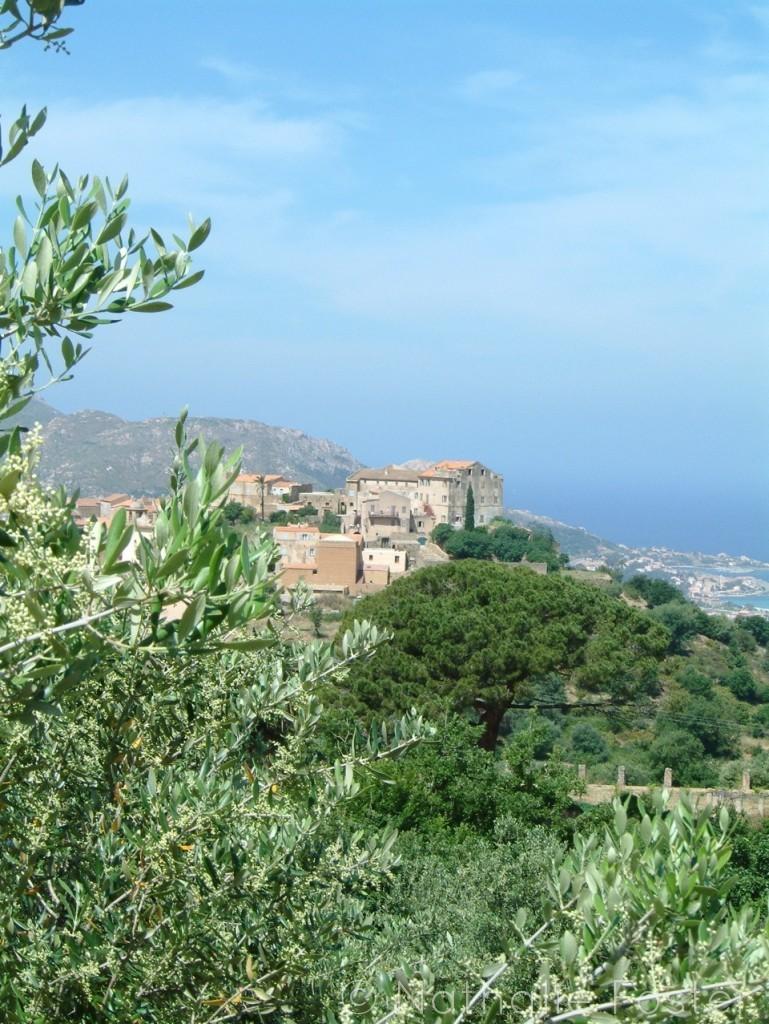 Corsica 15